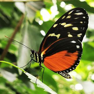 Zauberhafte Schmetterlinge und geheimnisvoller Regenwald